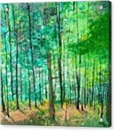 Dolly Sods Trees Acrylic Print