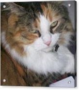 Dolly The Grumpy Cat Acrylic Print