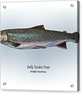 Dolly Varden Trout Acrylic Print by Ralph Martens