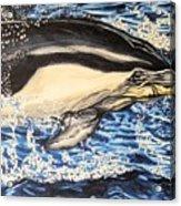 Dolphin Blue Acrylic Print