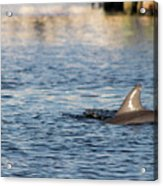 Dolphin By The Dock Acrylic Print