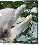 Dolphin Charm Acrylic Print