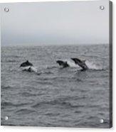 Dolphin Joy 2 Acrylic Print