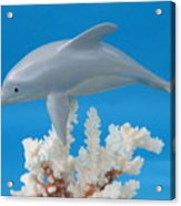 Dolphin On Coral Acrylic Print