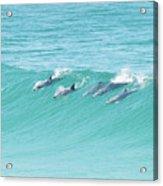 Dolphin Team Acrylic Print