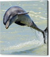 Dolphin Acrylic Print by Wade Aiken