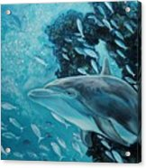 Dolphin With Small Fish Acrylic Print