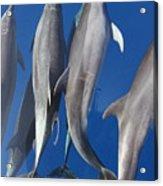 Dolphin2 Acrylic Print
