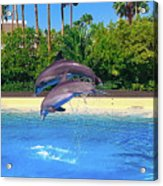 Dolphins Dance Acrylic Print