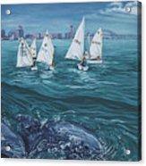 Dolphins In Corpus Christi Bay Acrylic Print