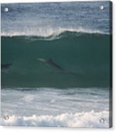 Dolphins Surfing The Waves Acrylic Print