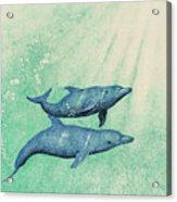 Dolphins Acrylic Print by Wayne Hardee