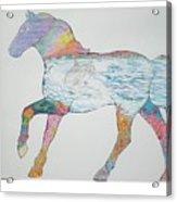 Dolpin Horse Acrylic Print