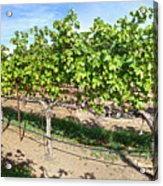 Domaine Chandon Panorama Acrylic Print