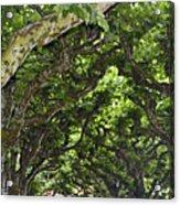 Dome Of Trees Acrylic Print