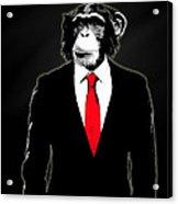 Domesticated Monkey Acrylic Print