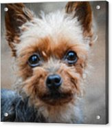Don't Leave Acrylic Print