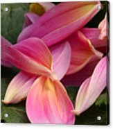 Done Blooming Acrylic Print by Steve Augustin