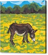 Donkey And Buttercup Field Acrylic Print