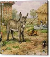 Donkey And Farmyard Fowl  Acrylic Print