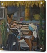 Donkey  At Taco Stand Acrylic Print