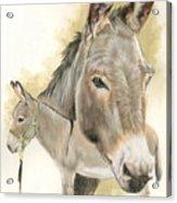 Donkey Acrylic Print
