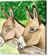 Donkey Duo Acrylic Print