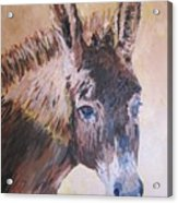 Donkey In The Sunlight Acrylic Print