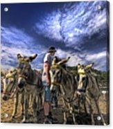 Donkey Rides Acrylic Print