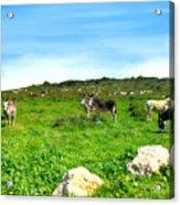 Donkeys Under A Blue Sky In Green Hills Acrylic Print