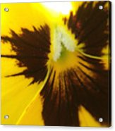 Don't Be A Pansy Acrylic Print