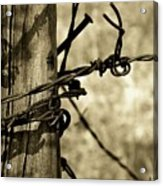 Don't Fence Me In 2 Acrylic Print