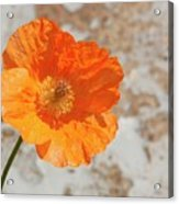 Doorway Poppy Acrylic Print