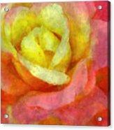 Dorie's Rose Acrylic Print