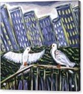 Dos Doves Acrylic Print