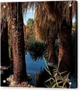 Dos Palmas Oasis Acrylic Print