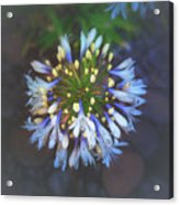 Dotted Light Acrylic Print
