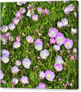 Dotted Meadow Acrylic Print