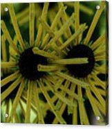 Double Bloom Acrylic Print