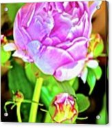 Double Blooms Acrylic Print