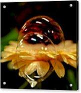 Double Bubble Flower Acrylic Print