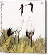 Double Crane Acrylic Print