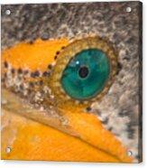 Double-crested Cormorant's Emerald Eye Acrylic Print