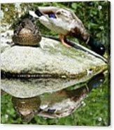 Double Double Duck Acrylic Print