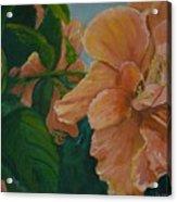 Double Hibiscus Acrylic Print