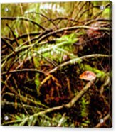 Double Rainforest Acrylic Print