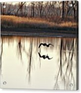 Double Reflection Acrylic Print