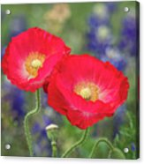 Double Take-two Red Poppies. Acrylic Print