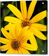 Double The Yellow Acrylic Print