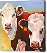 Double Trouble Hereford Cows Acrylic Print